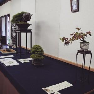 exposer des bonsai shohin