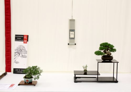 juniperus-itoigawa-chojubai