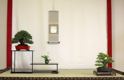 santen kazari avec pin noir et erable buerger