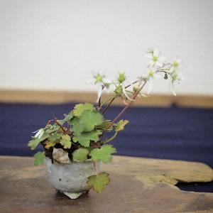 shitakusa plante d'accompagnement