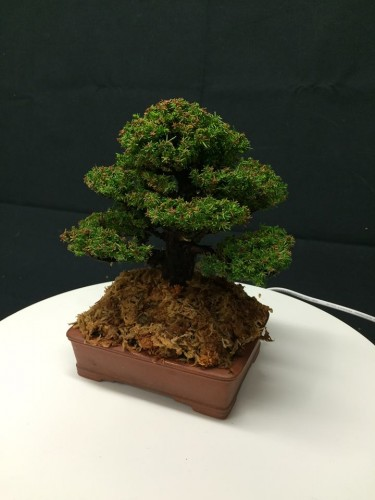 emballage et expedition de bonsai - 01