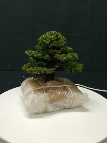 emballage et expedition de bonsai - 02