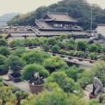 bonsai terrasse de Koji