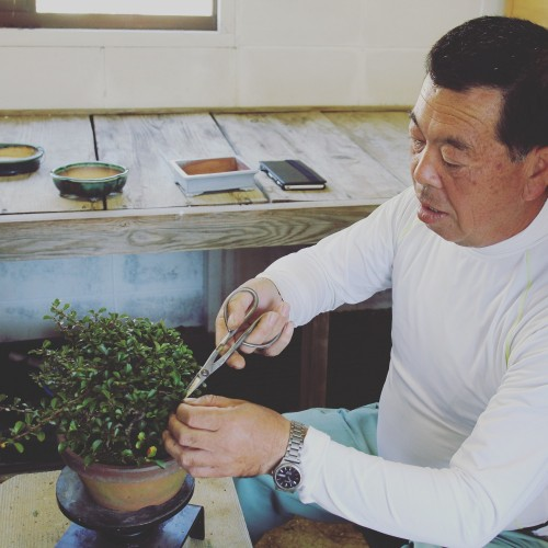 école de bonsai avec sensei Hiroyuki TANIBATA