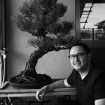travail sur les pins noirs au japon