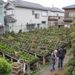 yorozuen angyo bonsai - 06