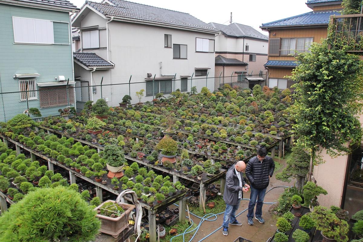 Et conditions japon adolescent ayumu
