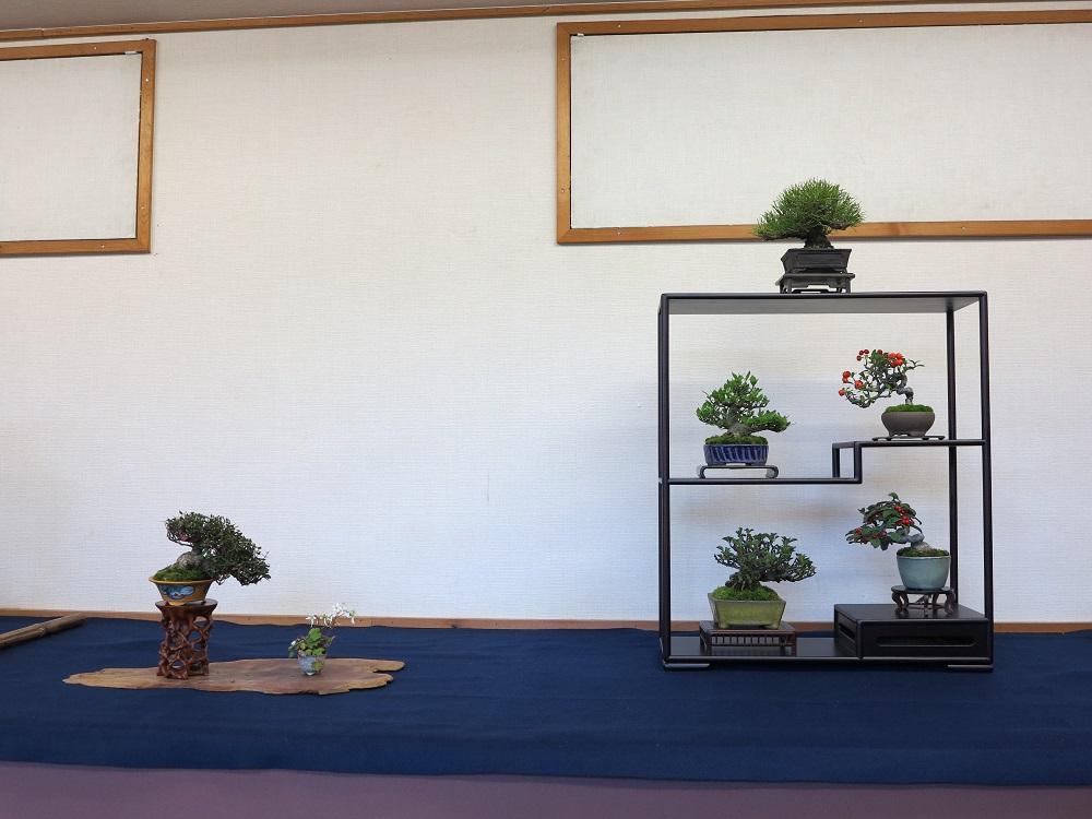 Composition de bonsai shohin en armoire Fuji