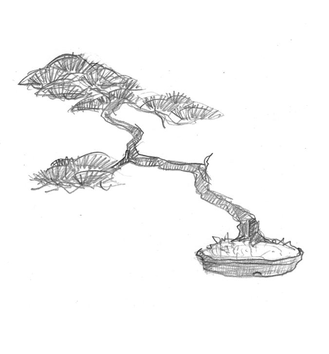 Impressions et mouvements bonsai shohin - Dessin bonzai ...