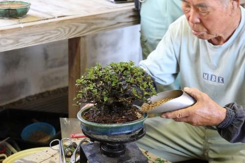ajout du substrat dans le pot