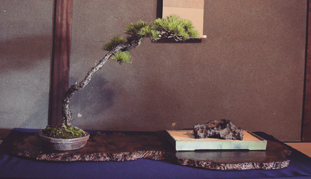 mouvement des bonsai
