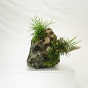 pierre ishizuki 00002 -05