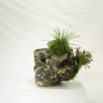 pierre ishizuki 00002 -06