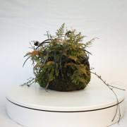 shitakusa ophiopogon fougere - 00008i - 01