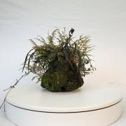 shitakusa ophiopogon fougere - 00008i - 02