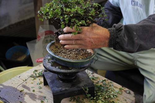 substrat au fond du pot pour le rempotage