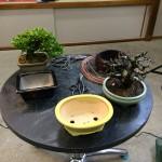 Valoriser les arbres par la poterie.
