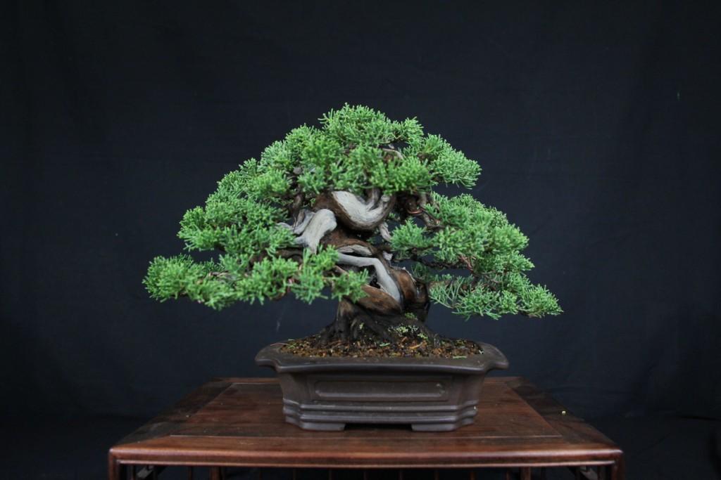 mise en forme juniperus