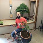 jp hoareau bonsai