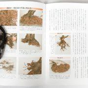 livre kinbon ilex 2
