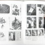 livre kinbon kaki 3
