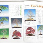 livre kinbon palmatum 1