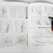 livre kinbon palmatum 3