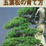 livre kinbon pin blanc