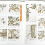 livre kinbon pin blanc 2