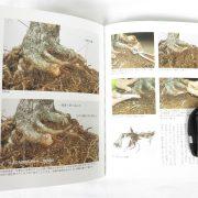 livre kinbon pin blanc 3