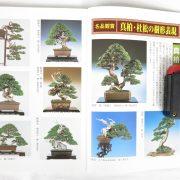 livre kinbon shimpaku 1