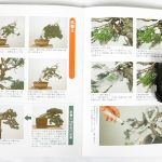 livre kinbon shimpaku 2