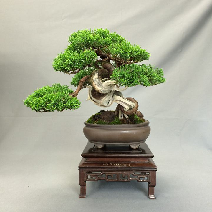 http://bonsai-shohin.com/wp-content/uploads/2016/06/preparation-maulevrier-2016.jpg