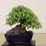 feature-shohin-focus-maulevrier