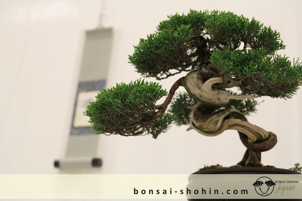 Bonsai Shohin Maulevrier-2016-shohin-fb-04