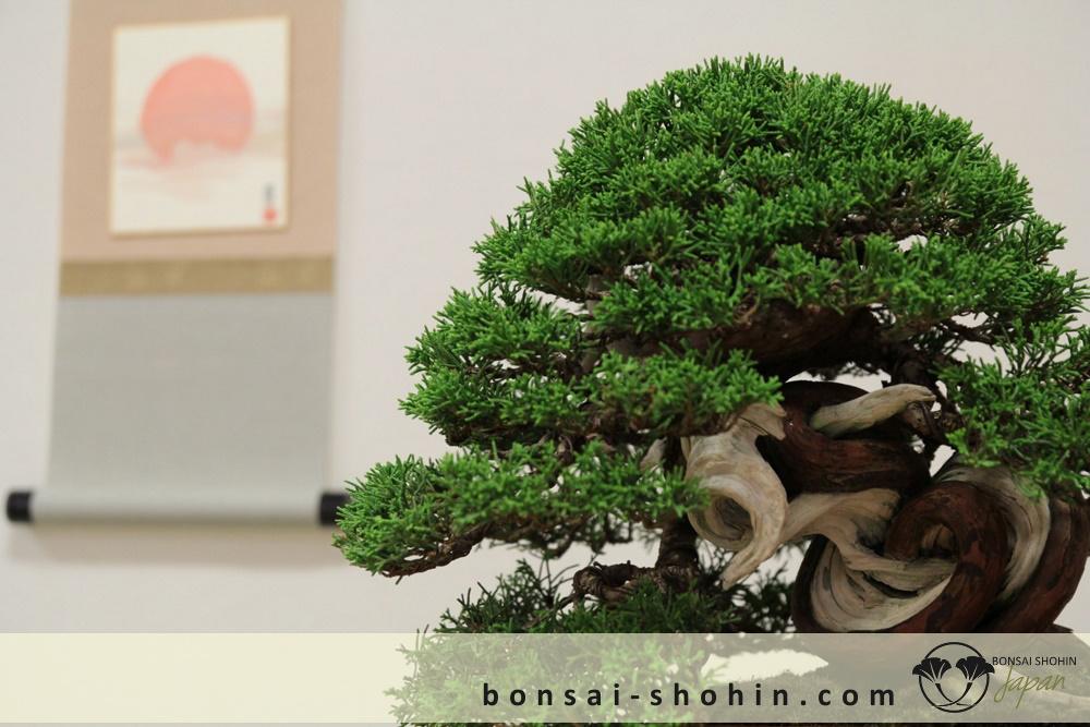 Bonsai Shohin Maulevrier-2016-shohin-fb-09