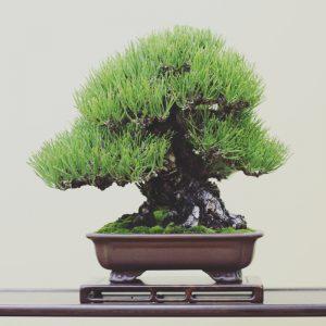 pin noir shohin taikanten 2016 - miniature