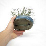 achat vente bonsai shohin - 100