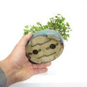 achat vente bonsai shohin - 28