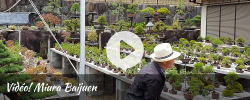 http://bonsai-shohin.com/wp-content/uploads/2017/05/edg-vidéo-miura.jpg