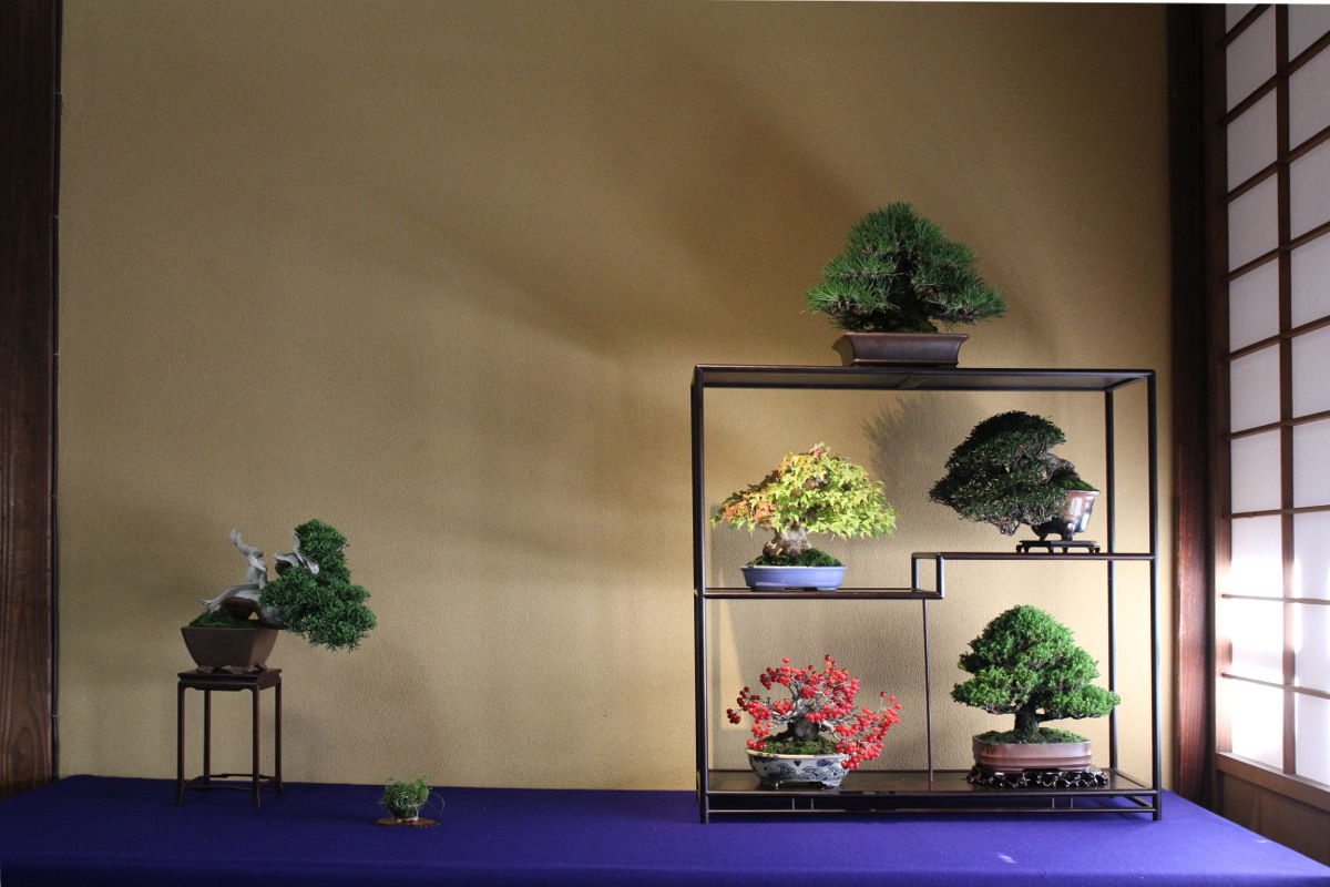 http://bonsai-shohin.com/wp-content/uploads/2017/09/composition-de-shohin.jpg