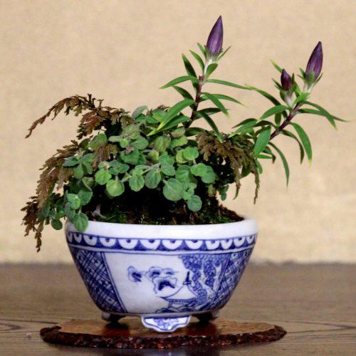 shitakusa avec plusieurs plantes