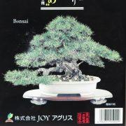 tamahi bonsai