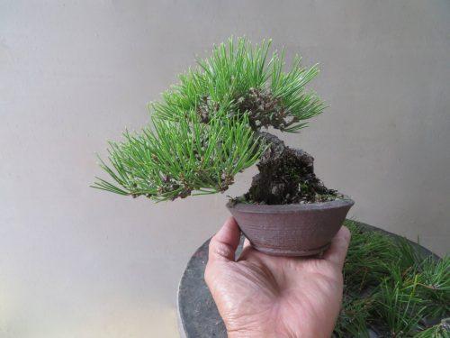 pin noir desaiguillé