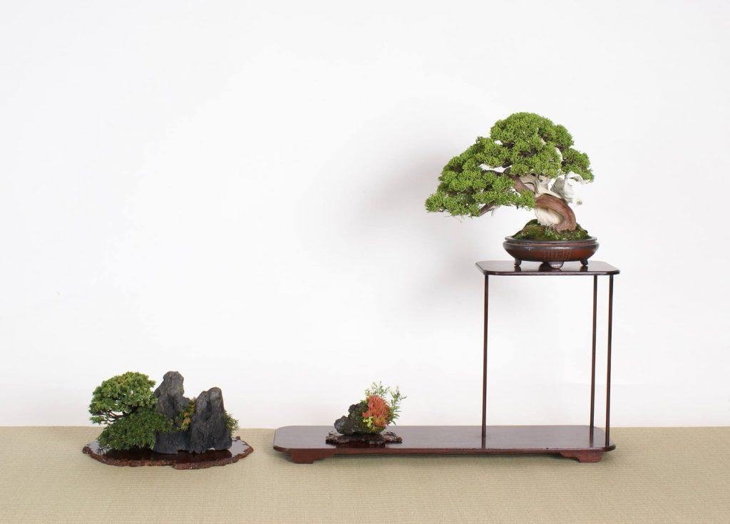 http://bonsai-shohin.com/wp-content/uploads/2017/10/rengo-ten-genevrier-ishitsuki-1024x735.jpg