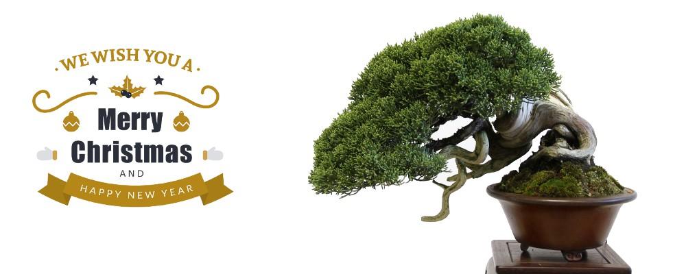 http://bonsai-shohin.com/wp-content/uploads/2017/12/slide-bonnes-fêtes.jpg