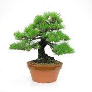 achat vente bonsai 01