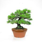 achat vente bonsai 02