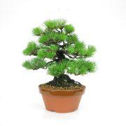 achat vente bonsai 06