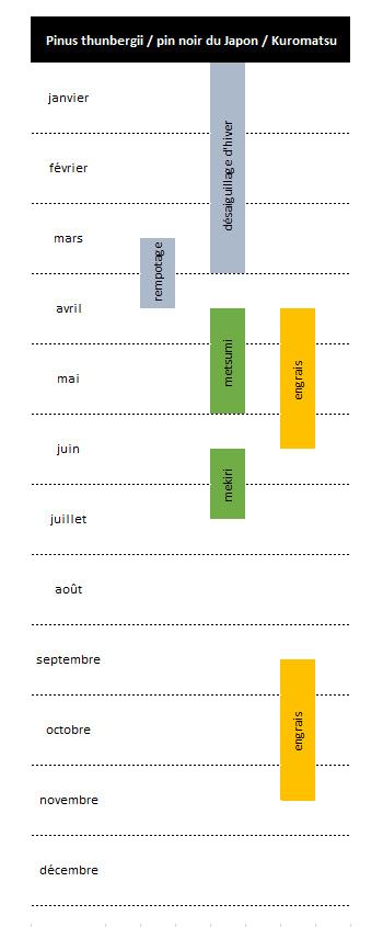 cycle de travail des pin noirs